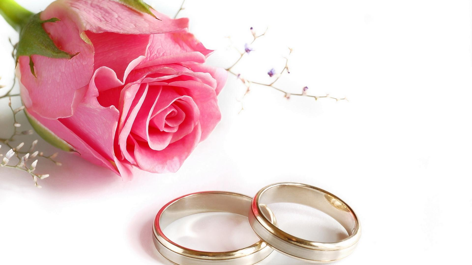 Rose Flower Ring HD Wallpapers