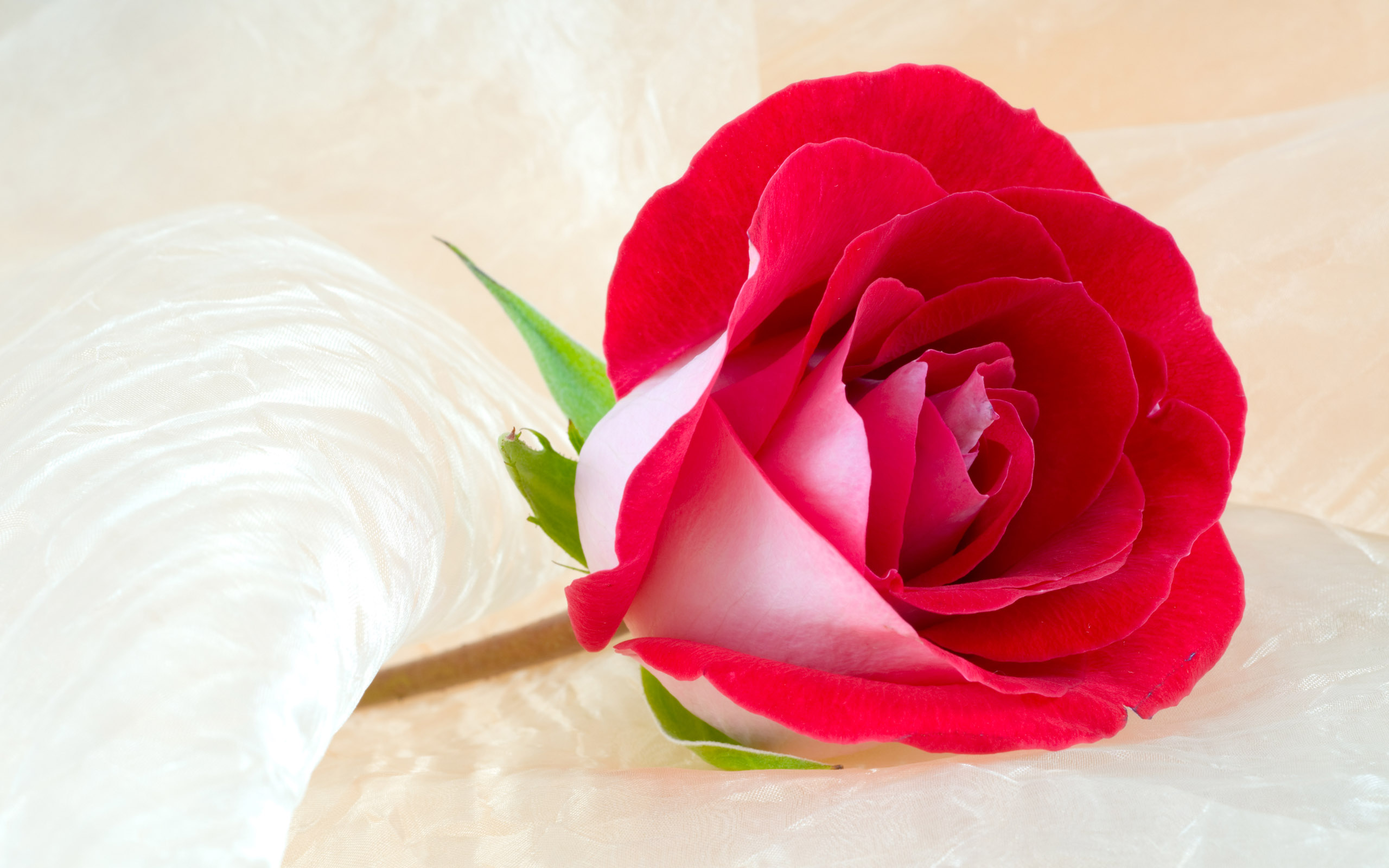 Rose Flower Images Hd Background 2 HD Wallpapers