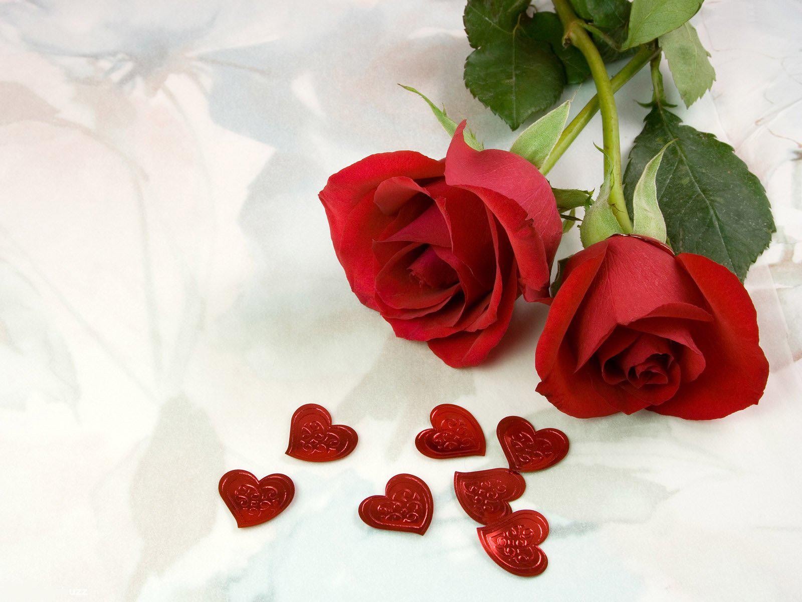 Rose Wallpaper · Rose Wallpaper ...