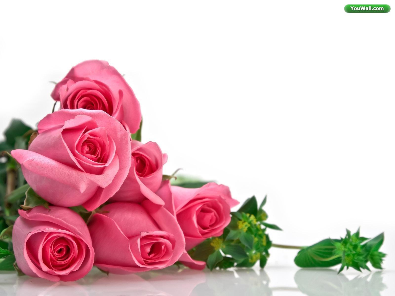 Interesting Rose Pink Wallpaper Hi Res
