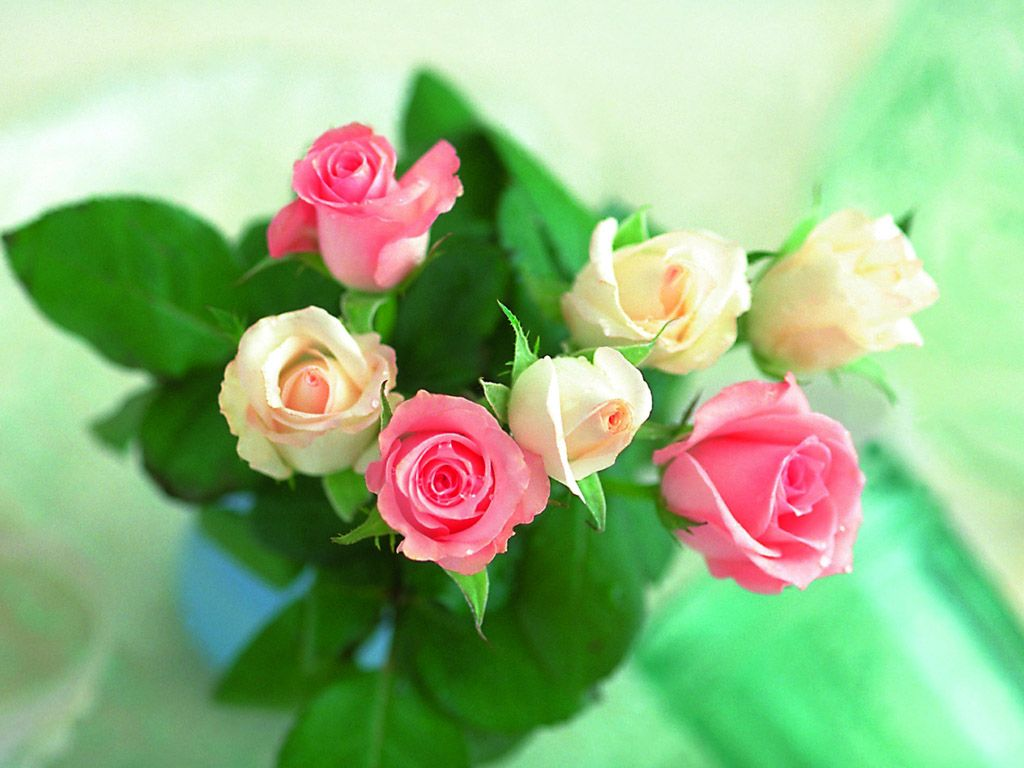 beautiful-roses-wallpapers-20-photos- (3)