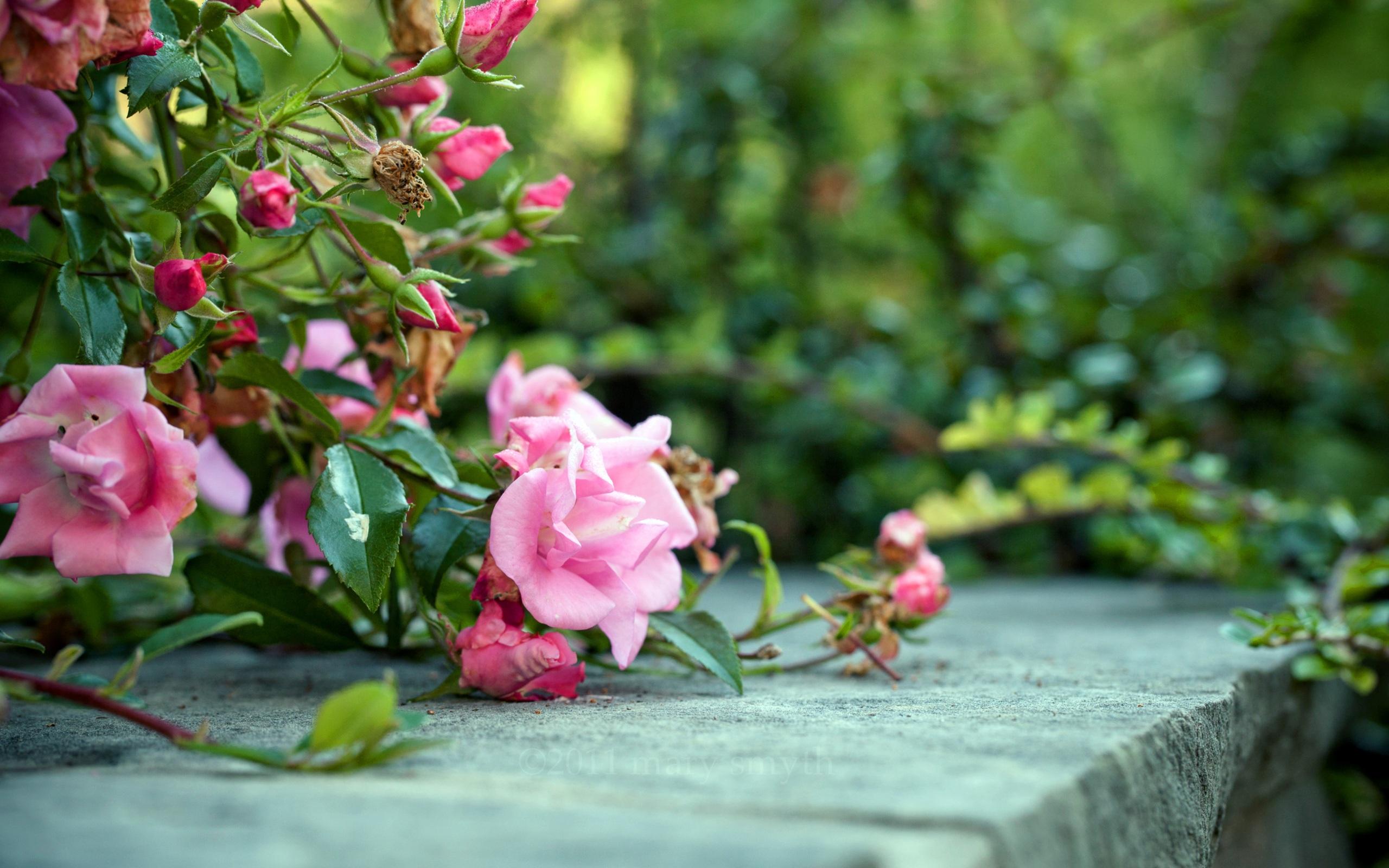 Rosebush Tree