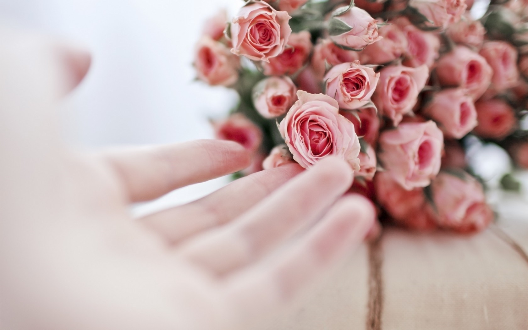 Roses Flowers Pink Hand Girl