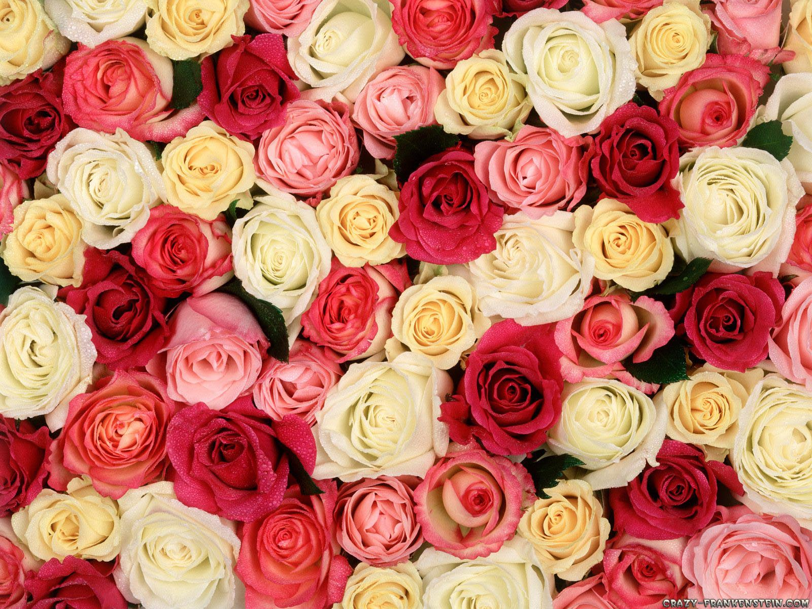 Wallpaper: Fragrant Roses Resolution: 1024x768 | 1600x1200