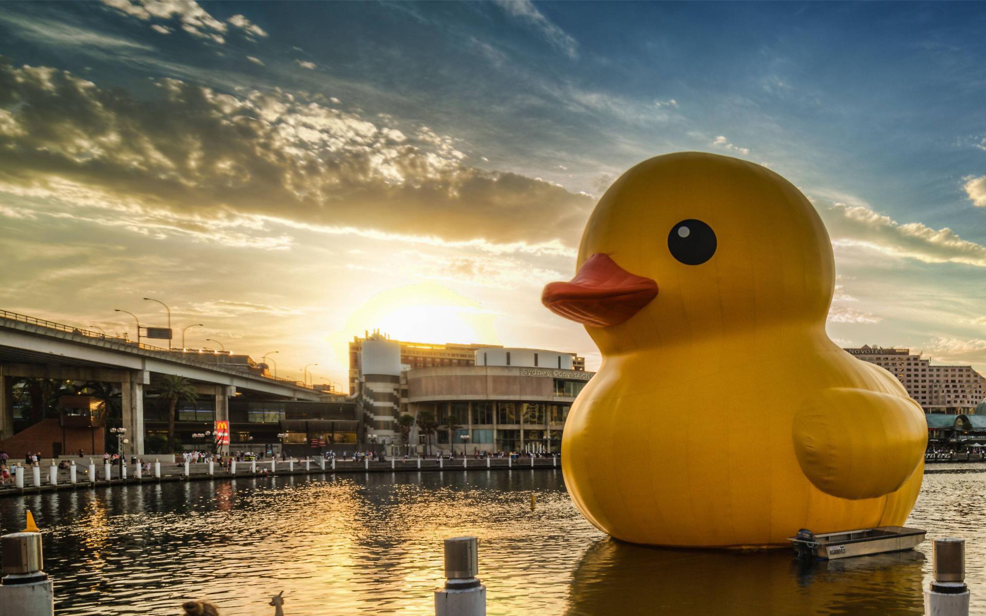 Rubber duck city