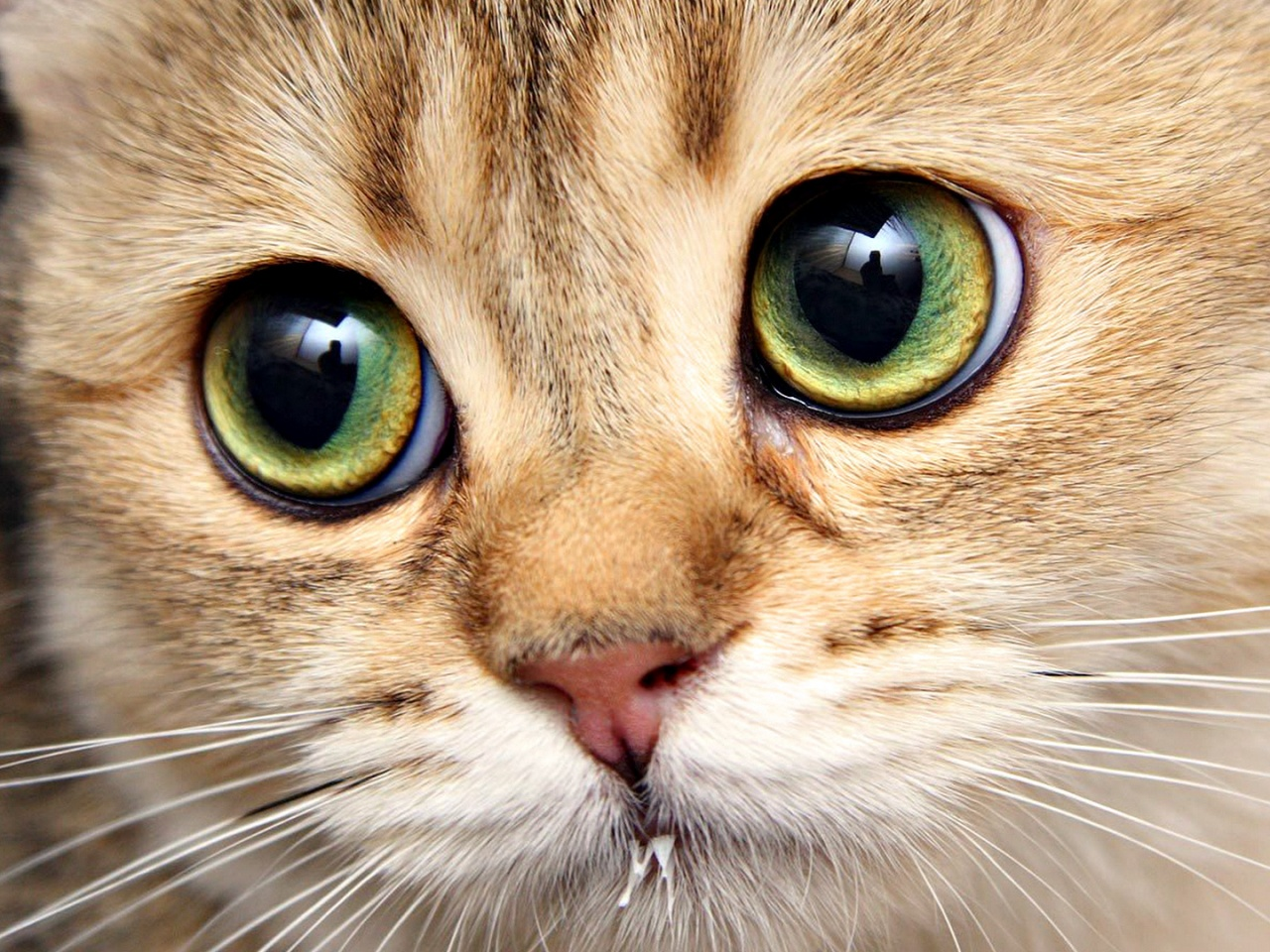 Sad cat eyes