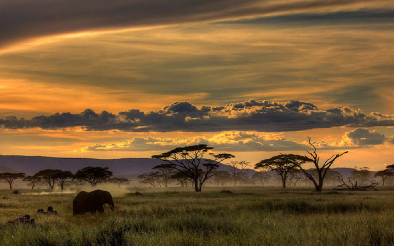 ... Safari HD Wallpapers (2) ...