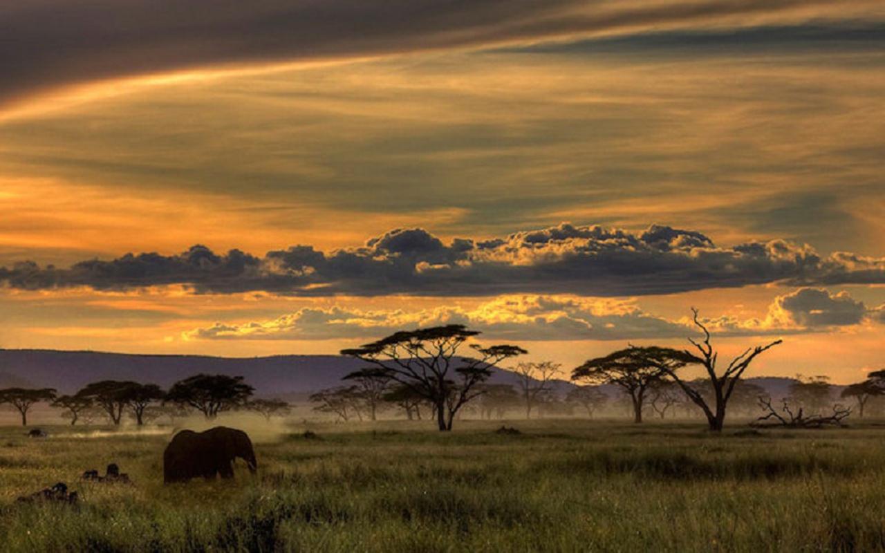 ... Safari HD Wallpapers (2) ...