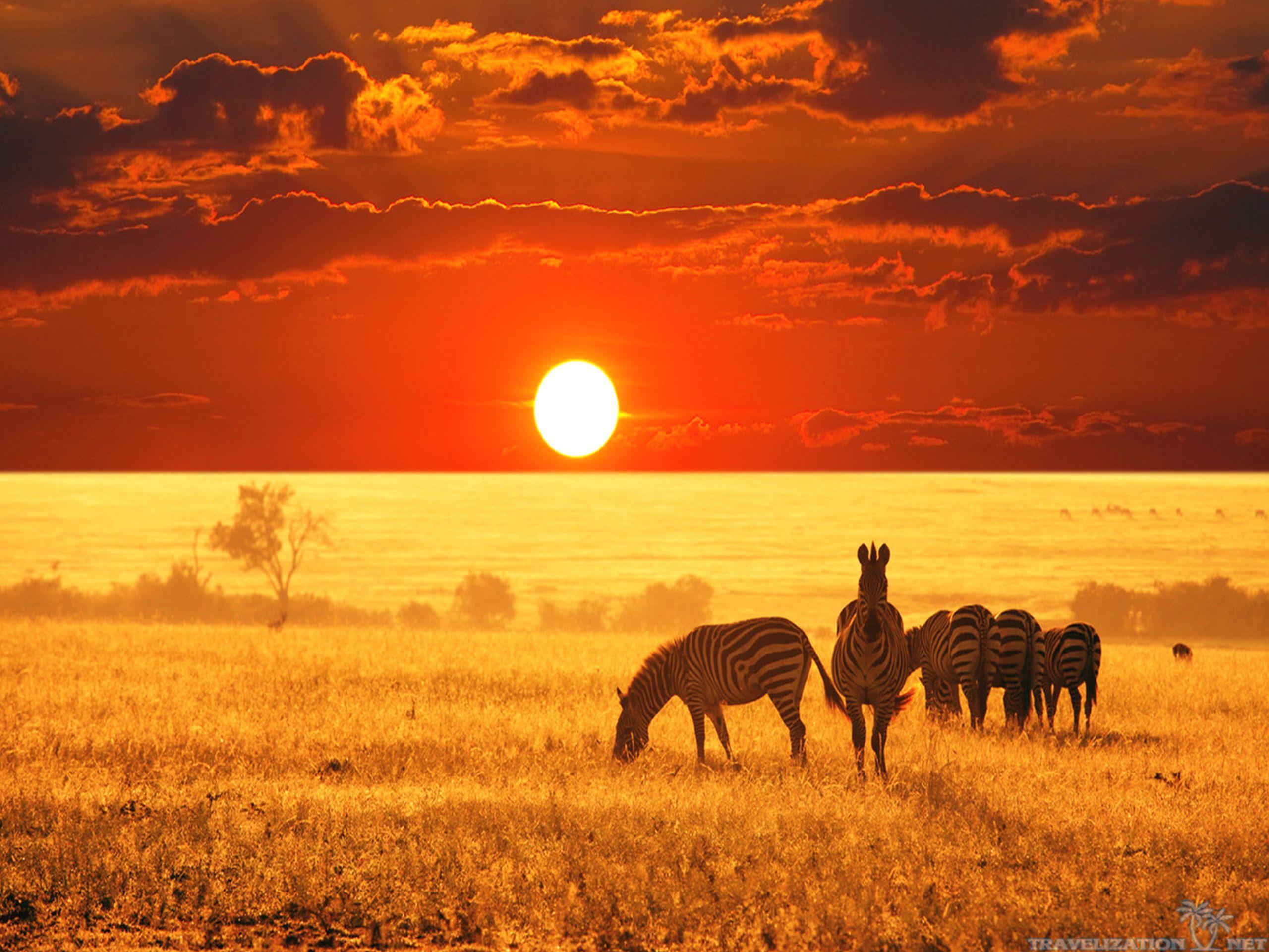 Animal African Safari Wallpapers