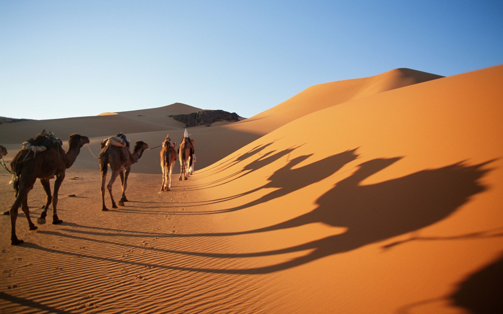 Camel drivers crossing sand dunes, Sahara Desert, Algeria
