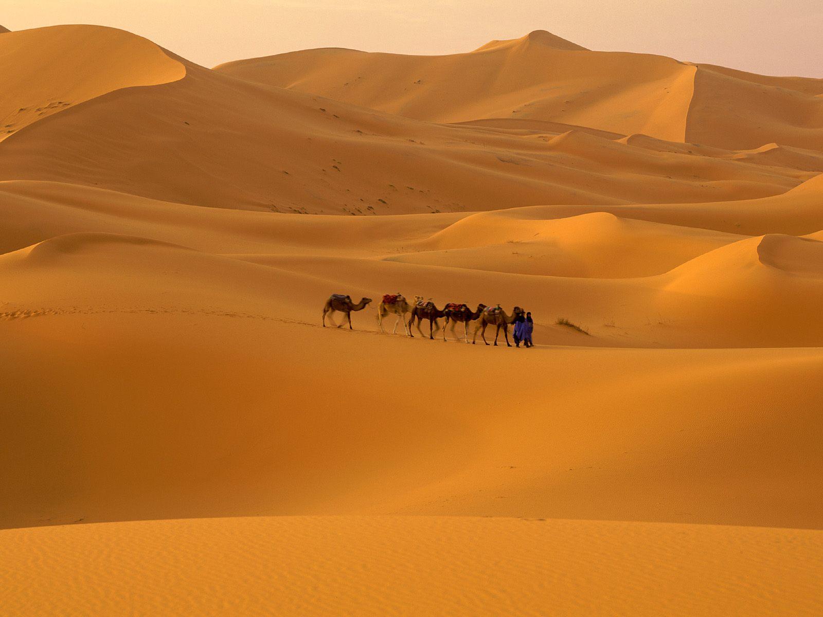 ... Sahara Desert (8) ...