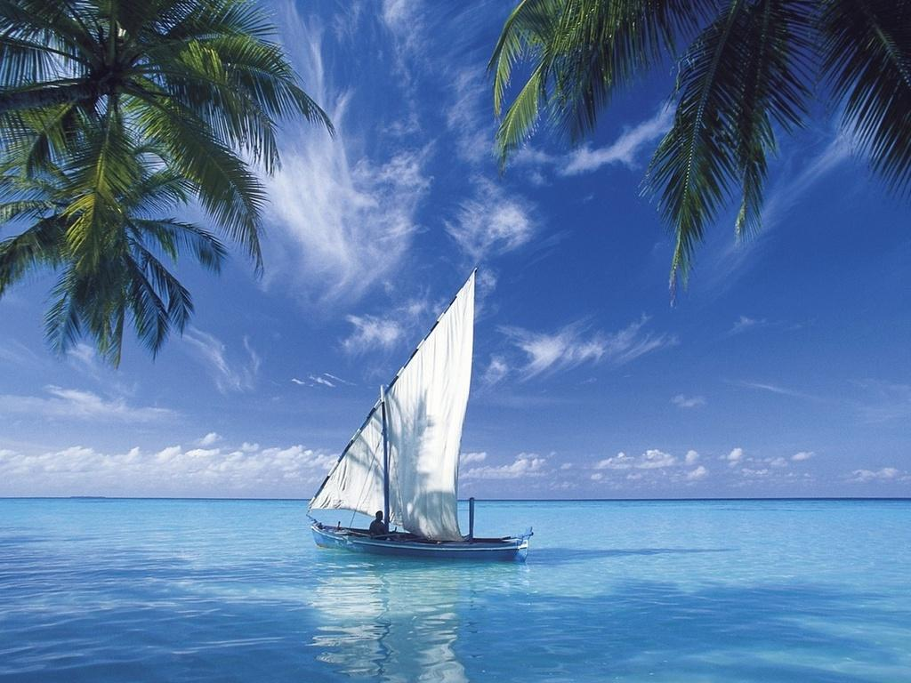 Widescreen resolutions (16:10): 1280x800 1440x900 1680x1050 1920x1200. Normal resolutions: 1024x768 1280x1024. Wallpaper Tags: boat sailboat sea palm