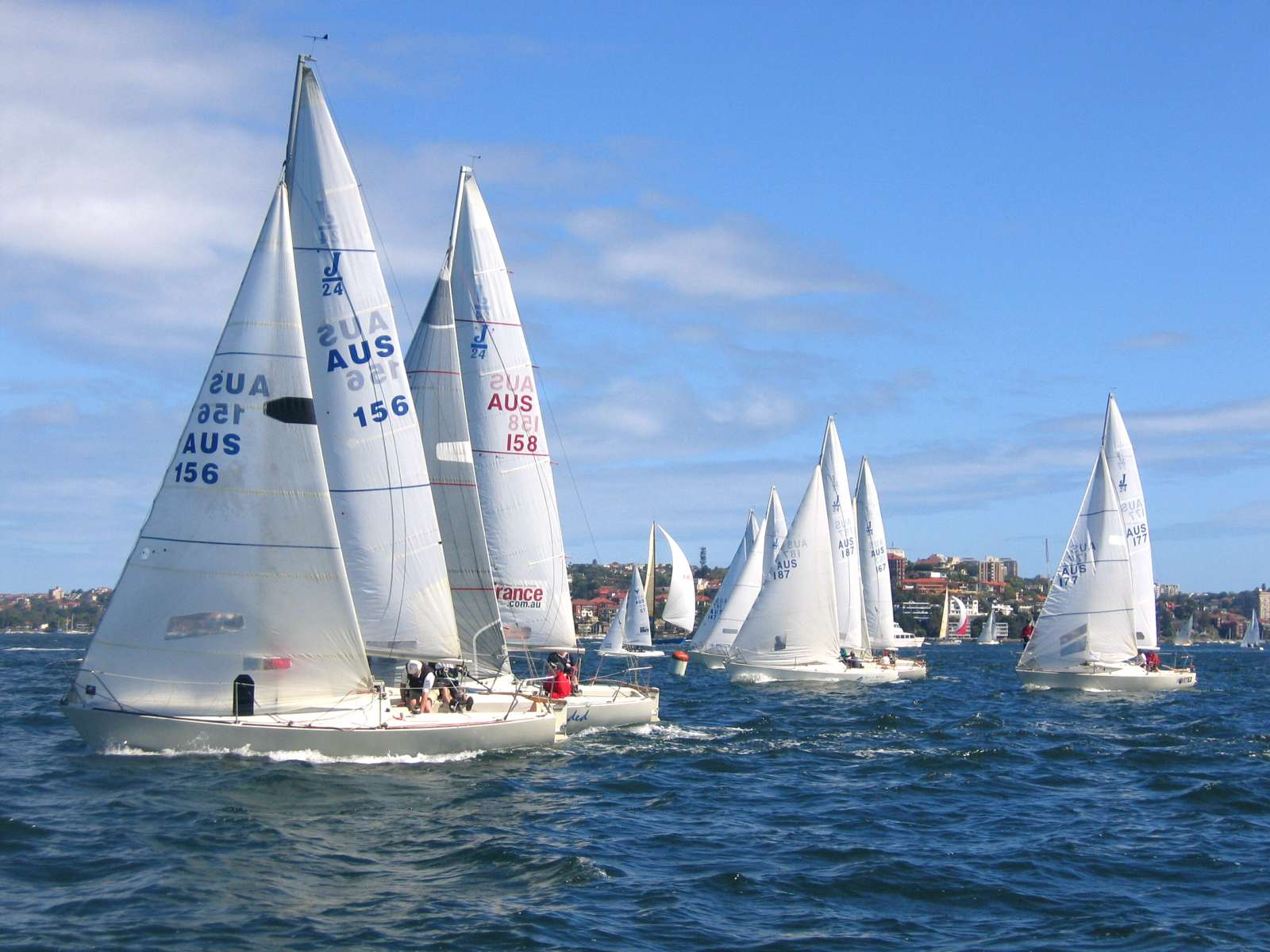 J-24 yacht racing, Sydney Harbour.jpg