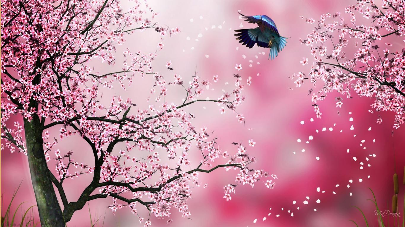 Bird Sakura Wallpaper For Ipad