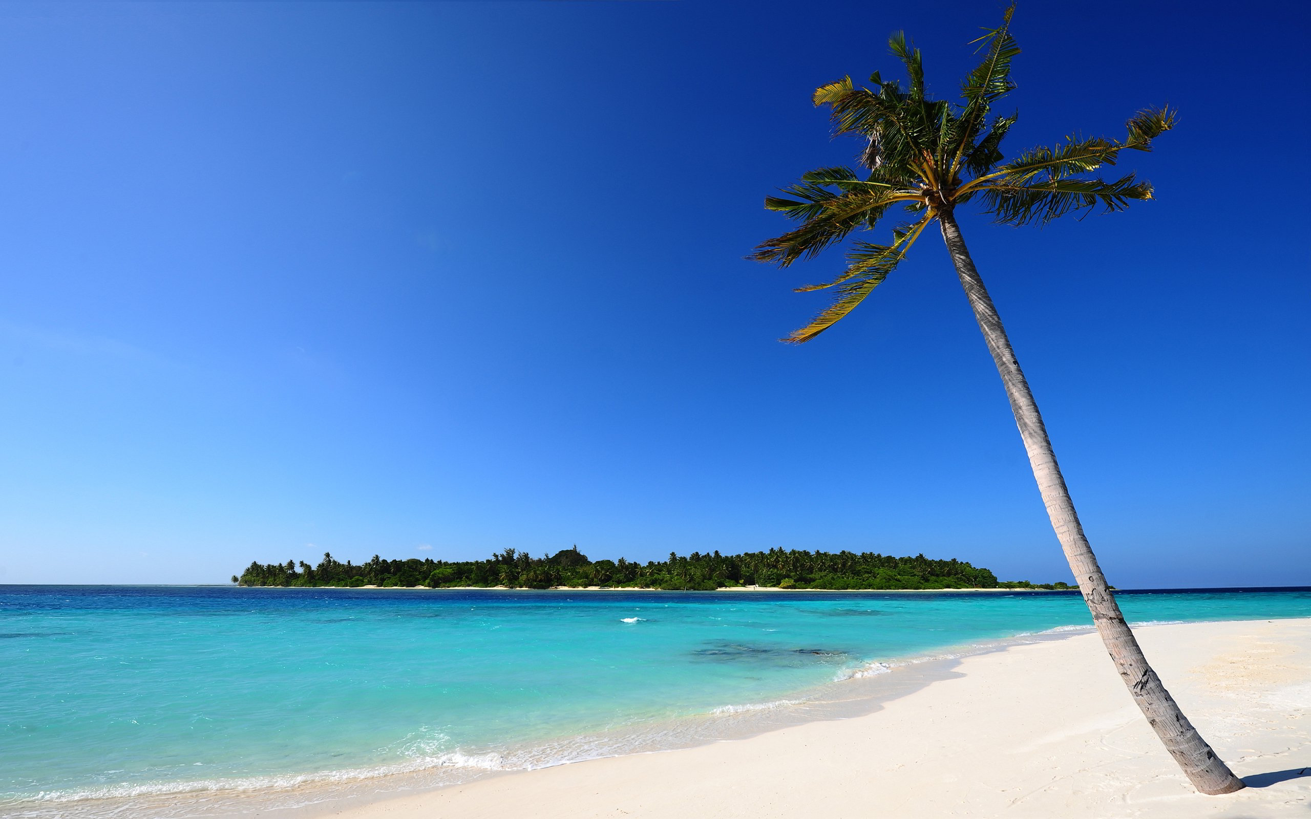 Beach Palm White Sand Wallpapers Pictures Photos Images. «