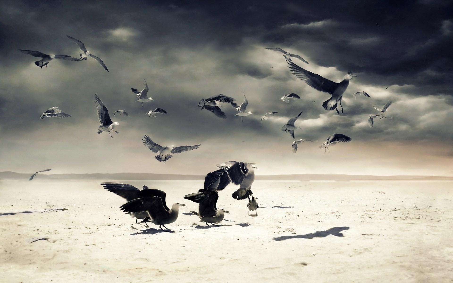 Sand Birds Gulls