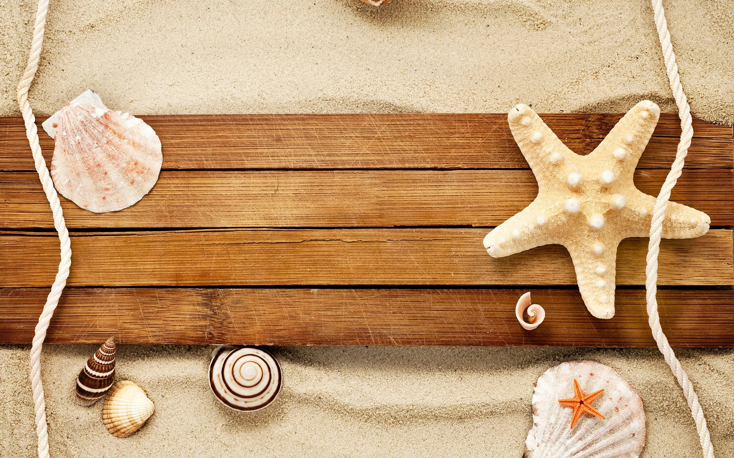 Sand Shells Snail Starfish Beach