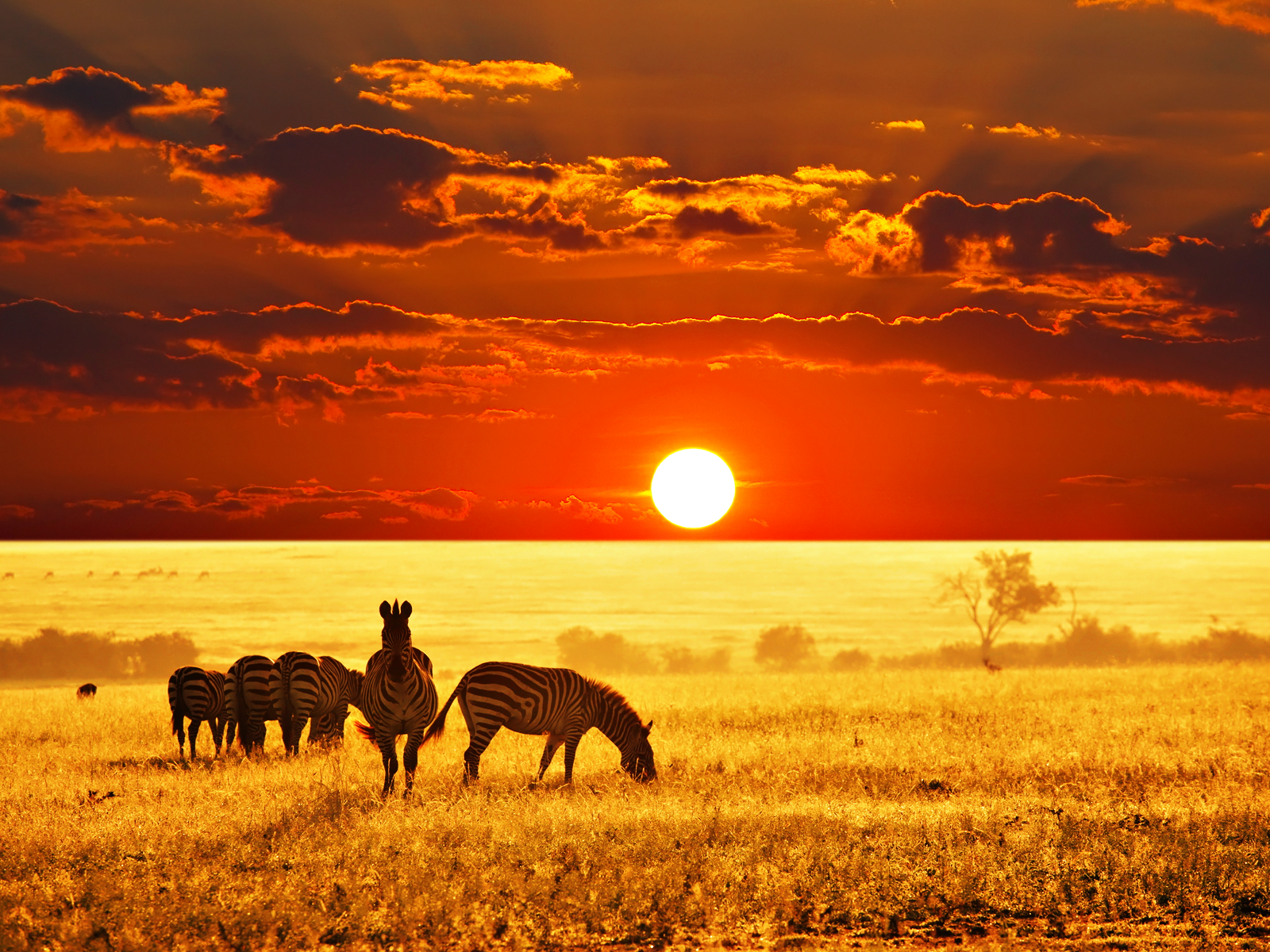 http://savannainafrica.files.wordpress.com/2012/01/african-savannah-zebras-wall-inkbluesky6.png