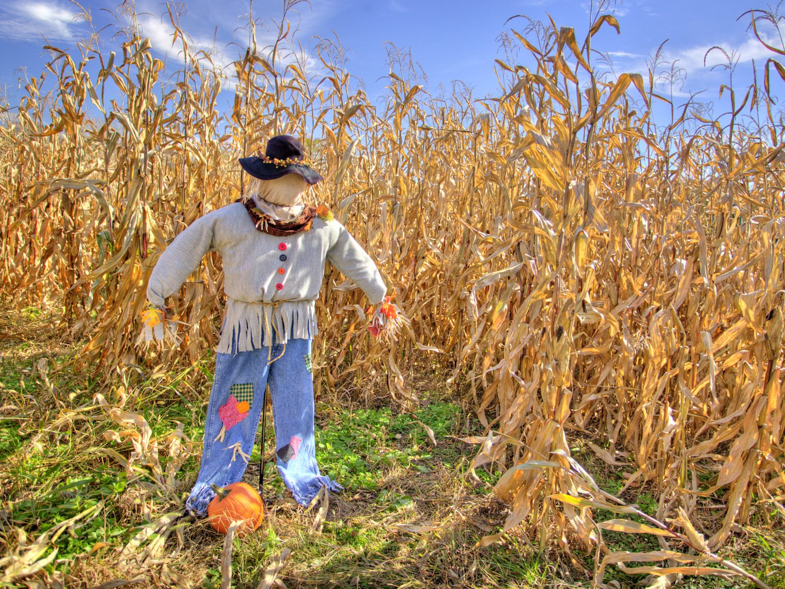 This is the average scarecrow in a cornfield.
