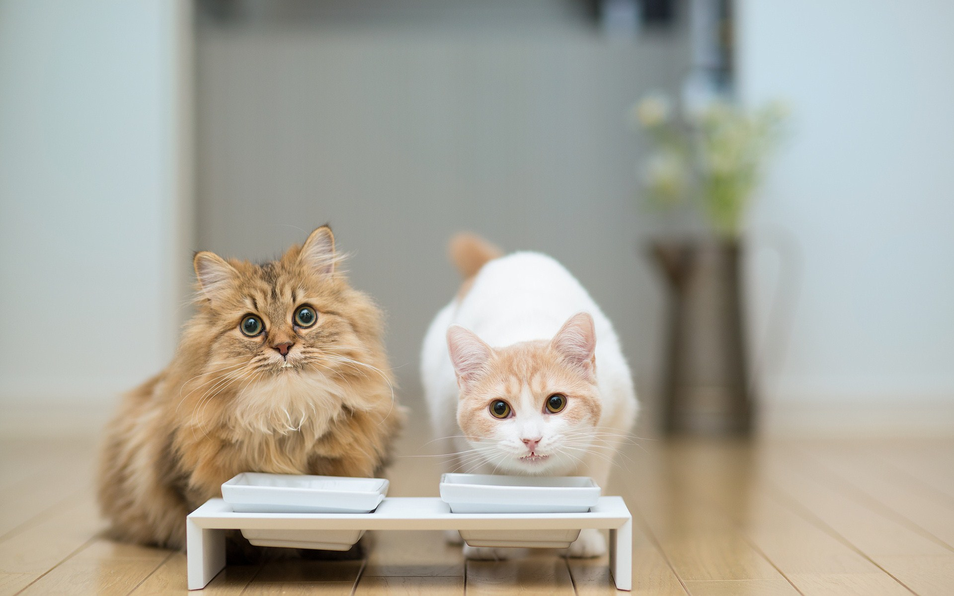 Scared Looking Cats