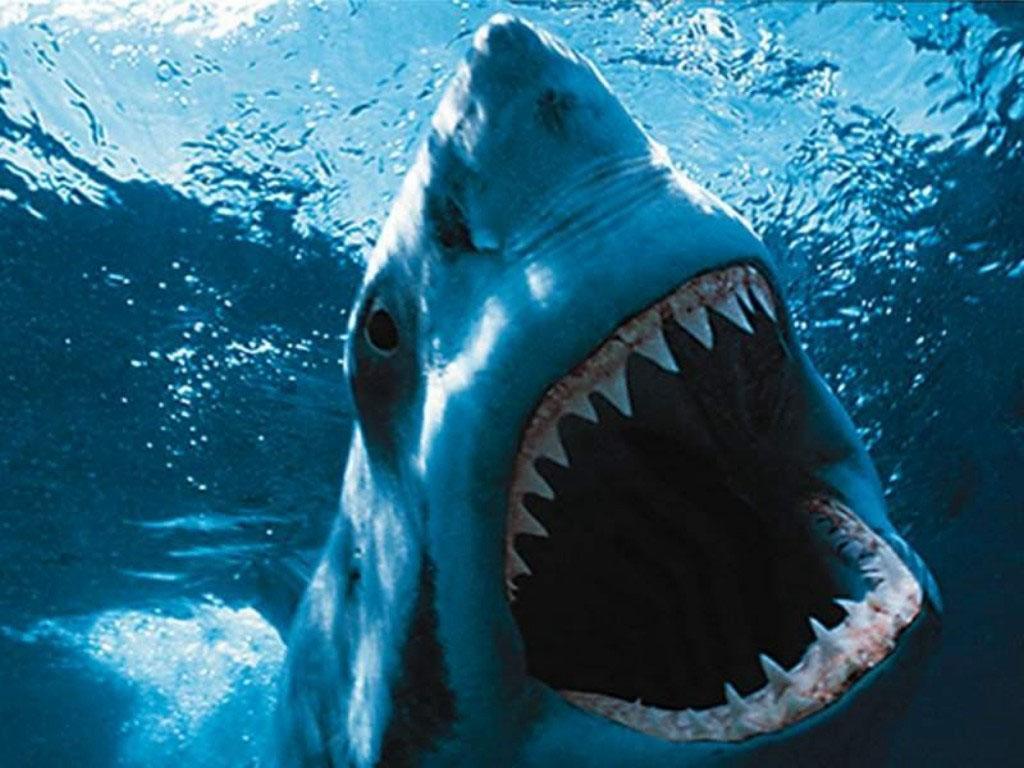 Scary Shark Wallpaper