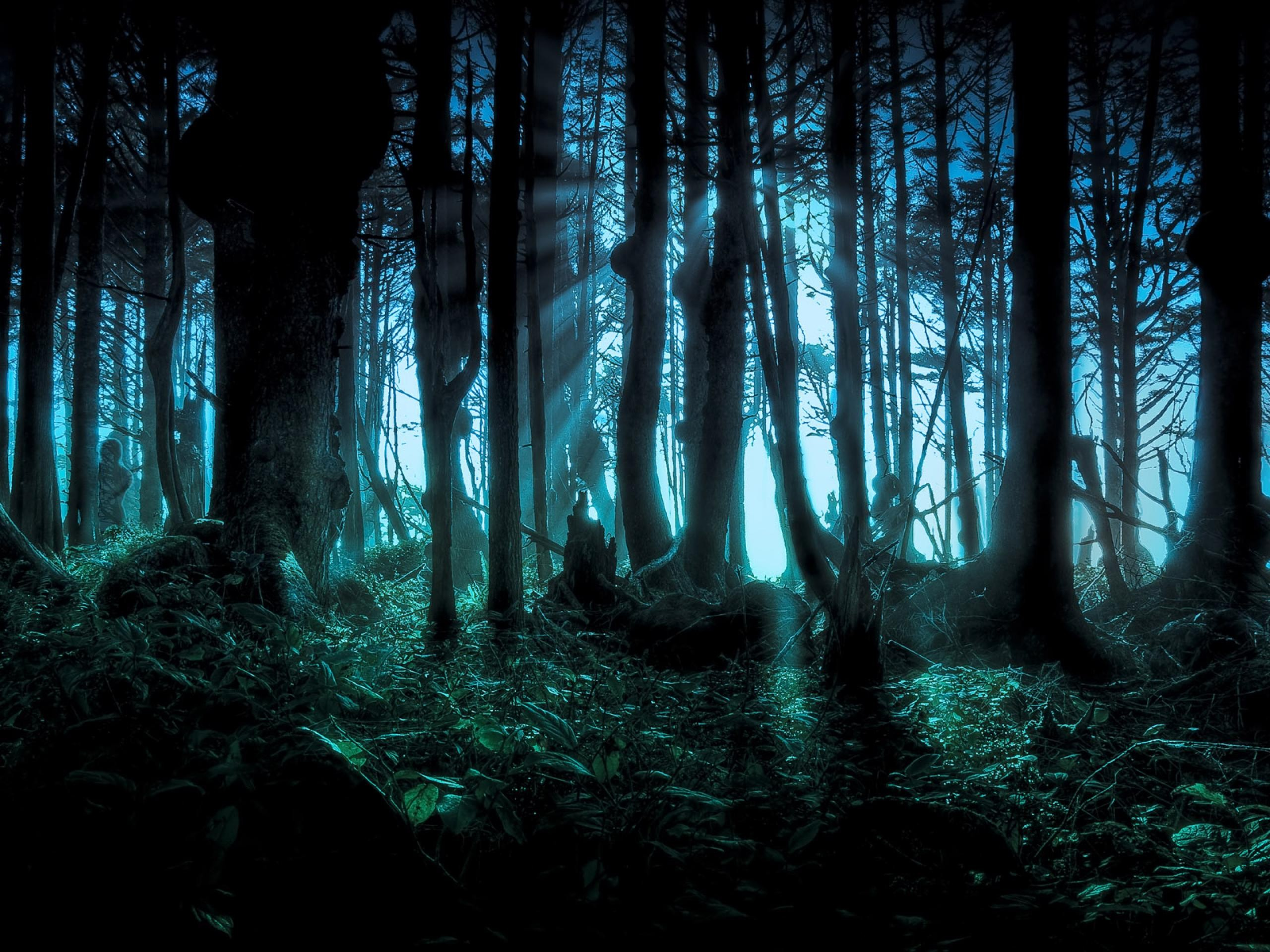 Scary Woods Wallpaper
