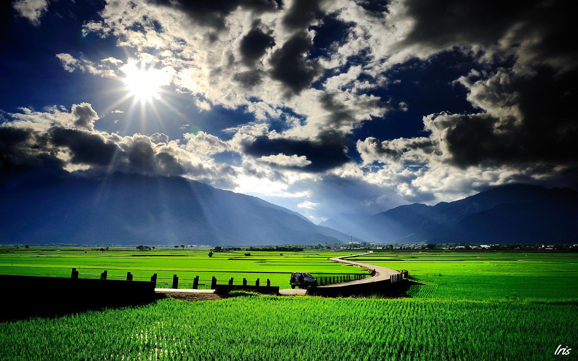 Paddy field scenery