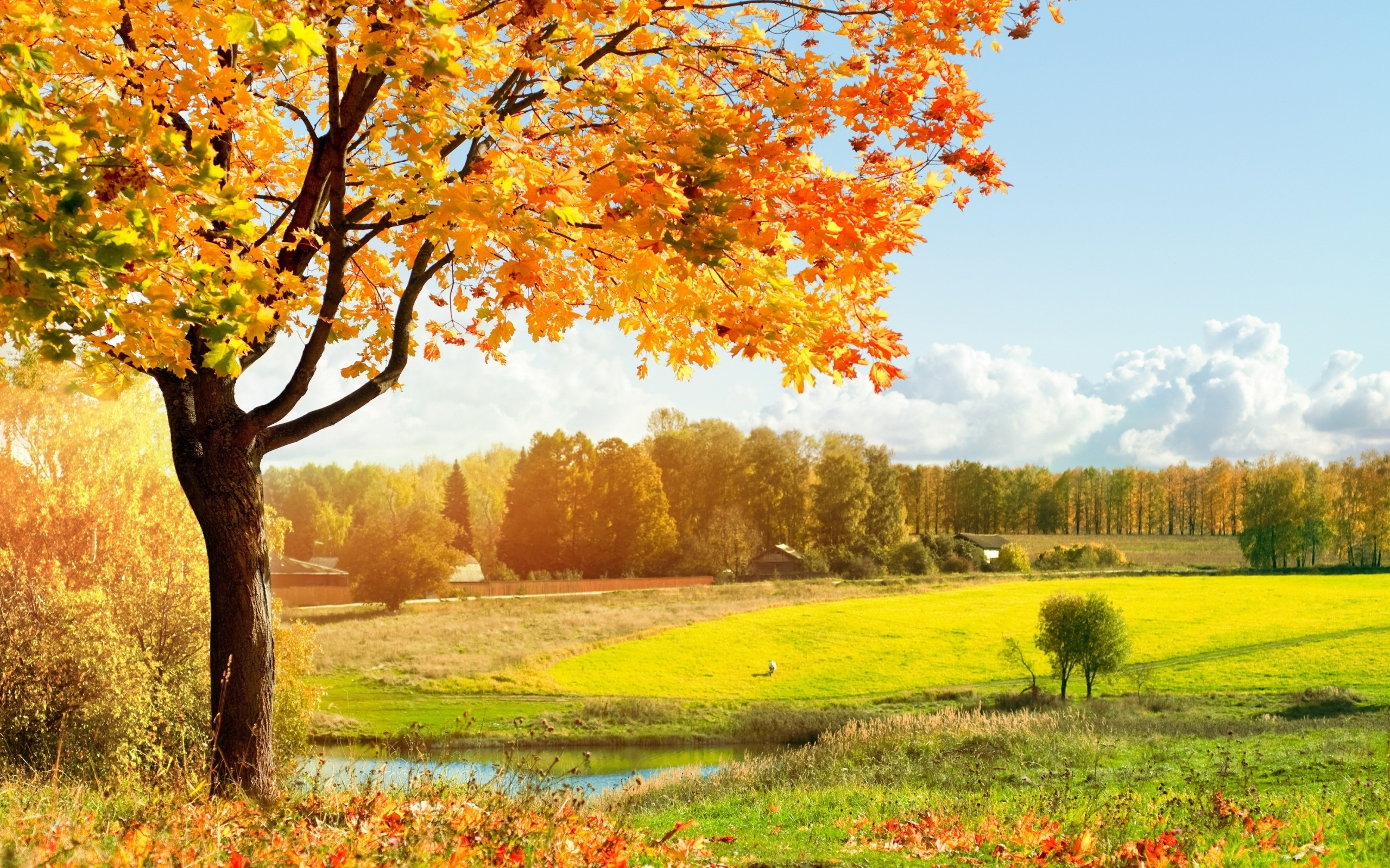 Wallpaper with Tree and Orange Leaves Scenery Free Stock Photo 2560x1600px