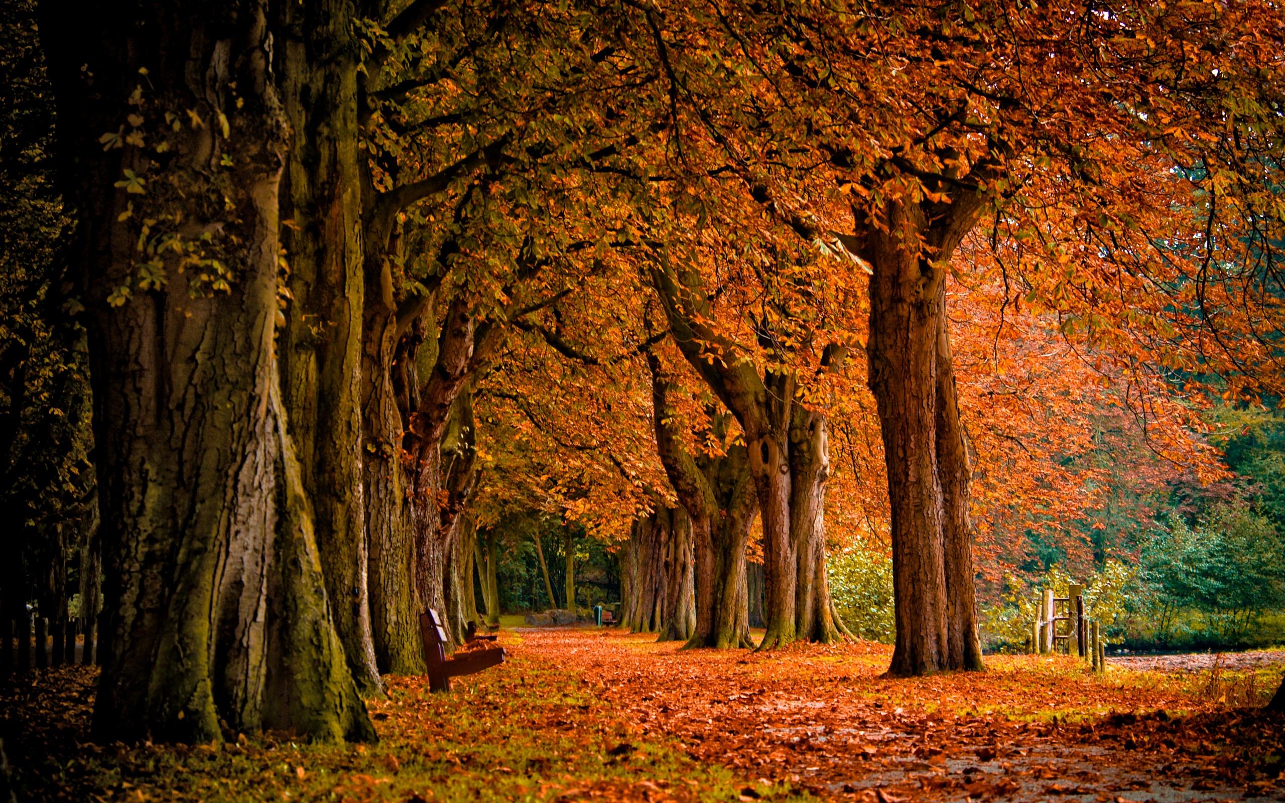 Fall Scenery 41 Thumb
