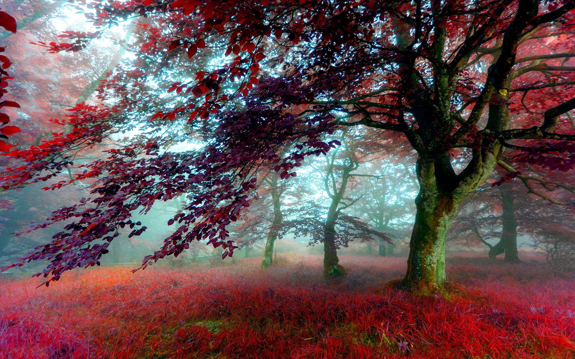 Red Autumn Scenery