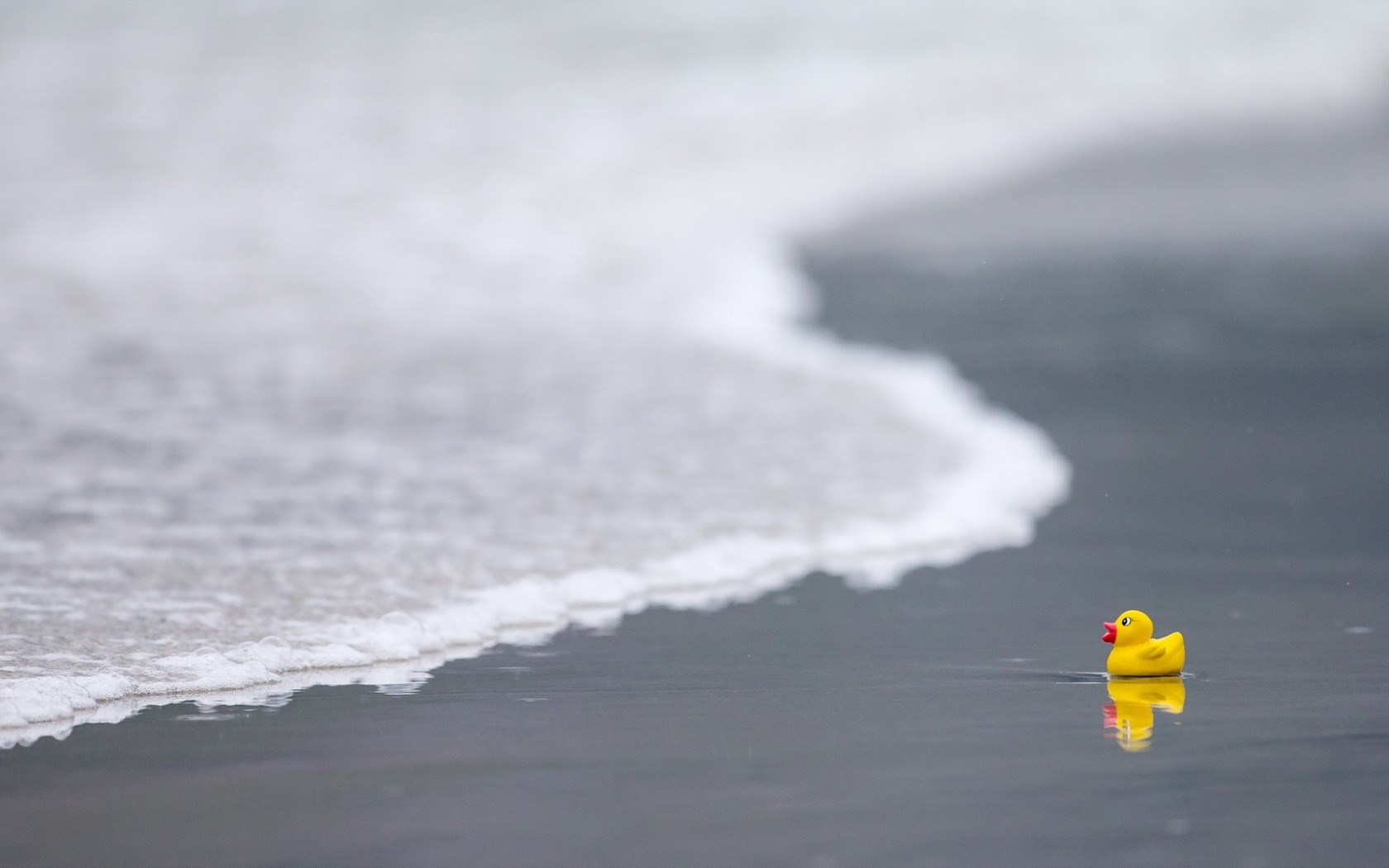 Sea Beach Duck Toy