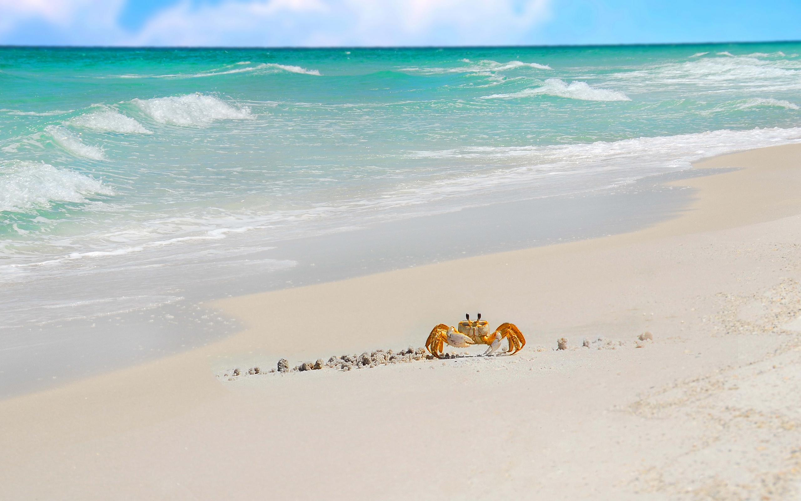 Sea Crab Beach