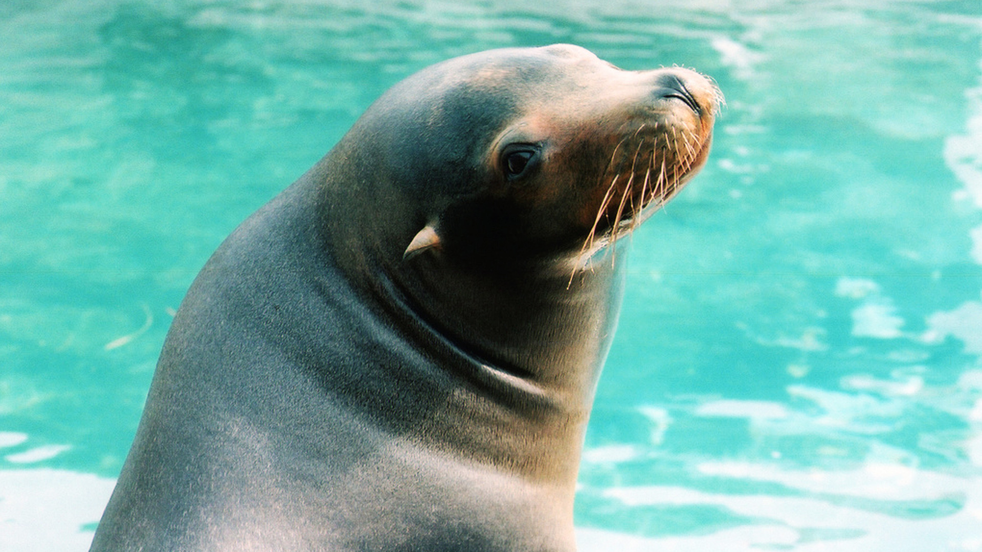 filephoto Sea Lion
