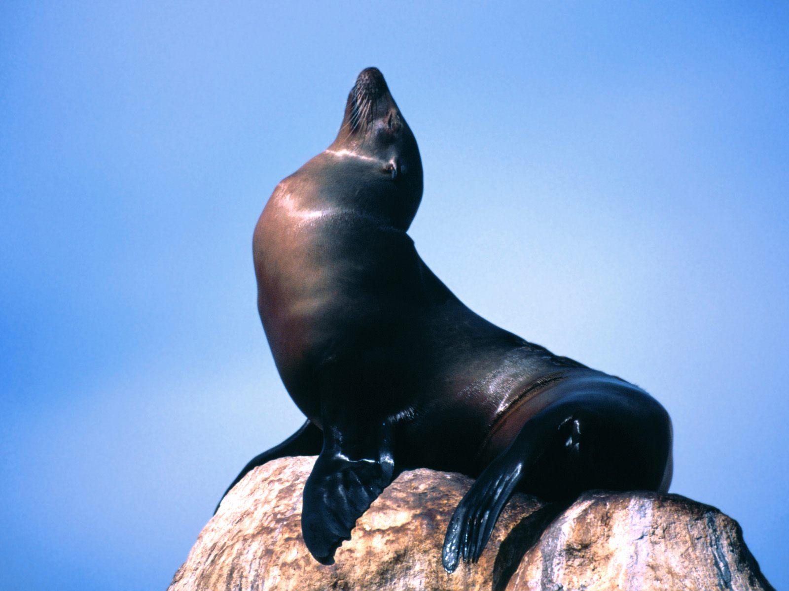 Sea Lion 9620 1600x1200 px