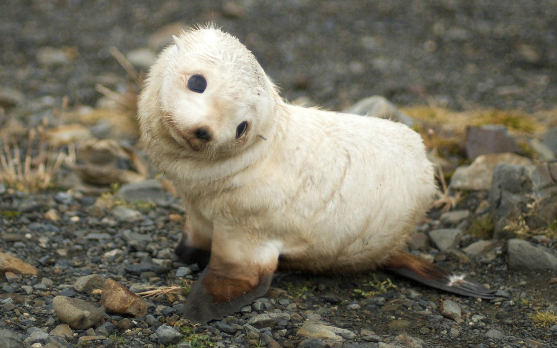 Just a baby Sea Lion, not a big deal, really