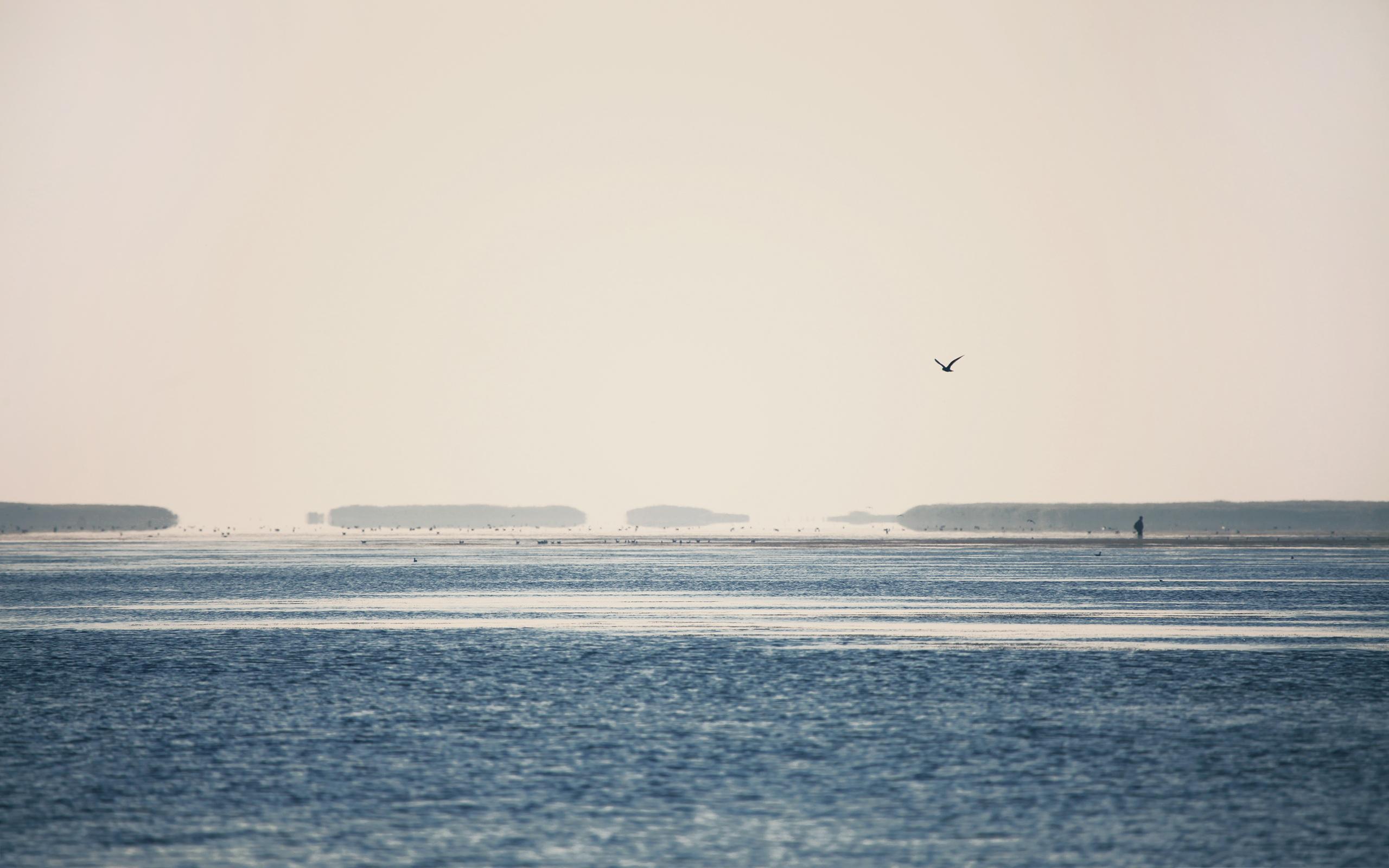 Sea morning birds