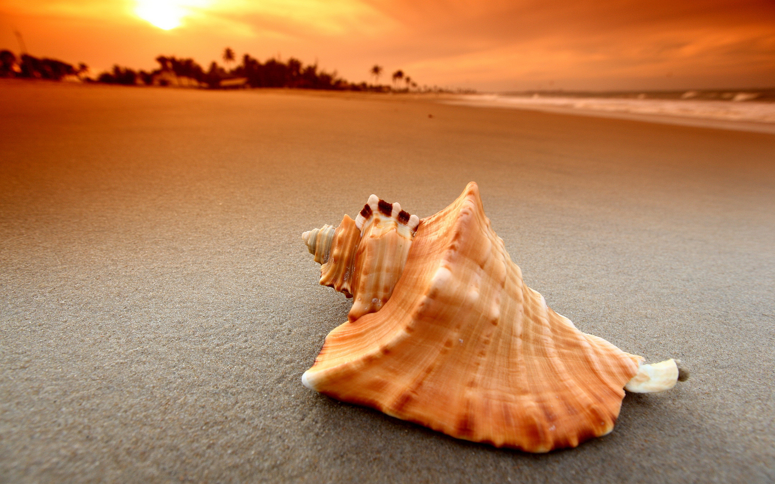 Beach Shell Sunset