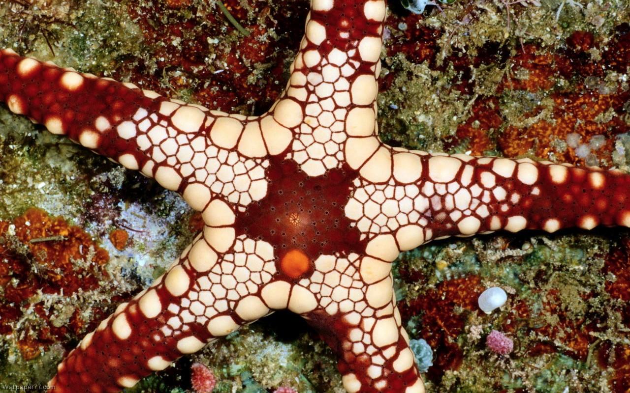 Sea Stars 9005 1280x800 px