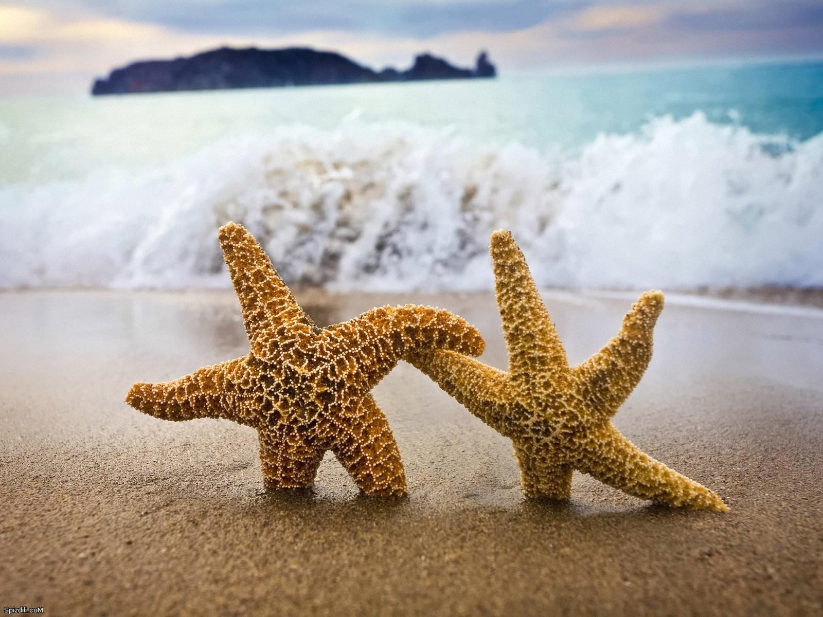 Seastars starfish 1600x1200