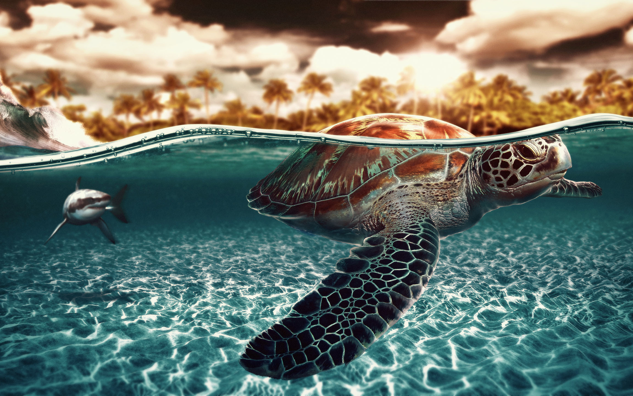 ... Sea Turtle Wallpaper ...