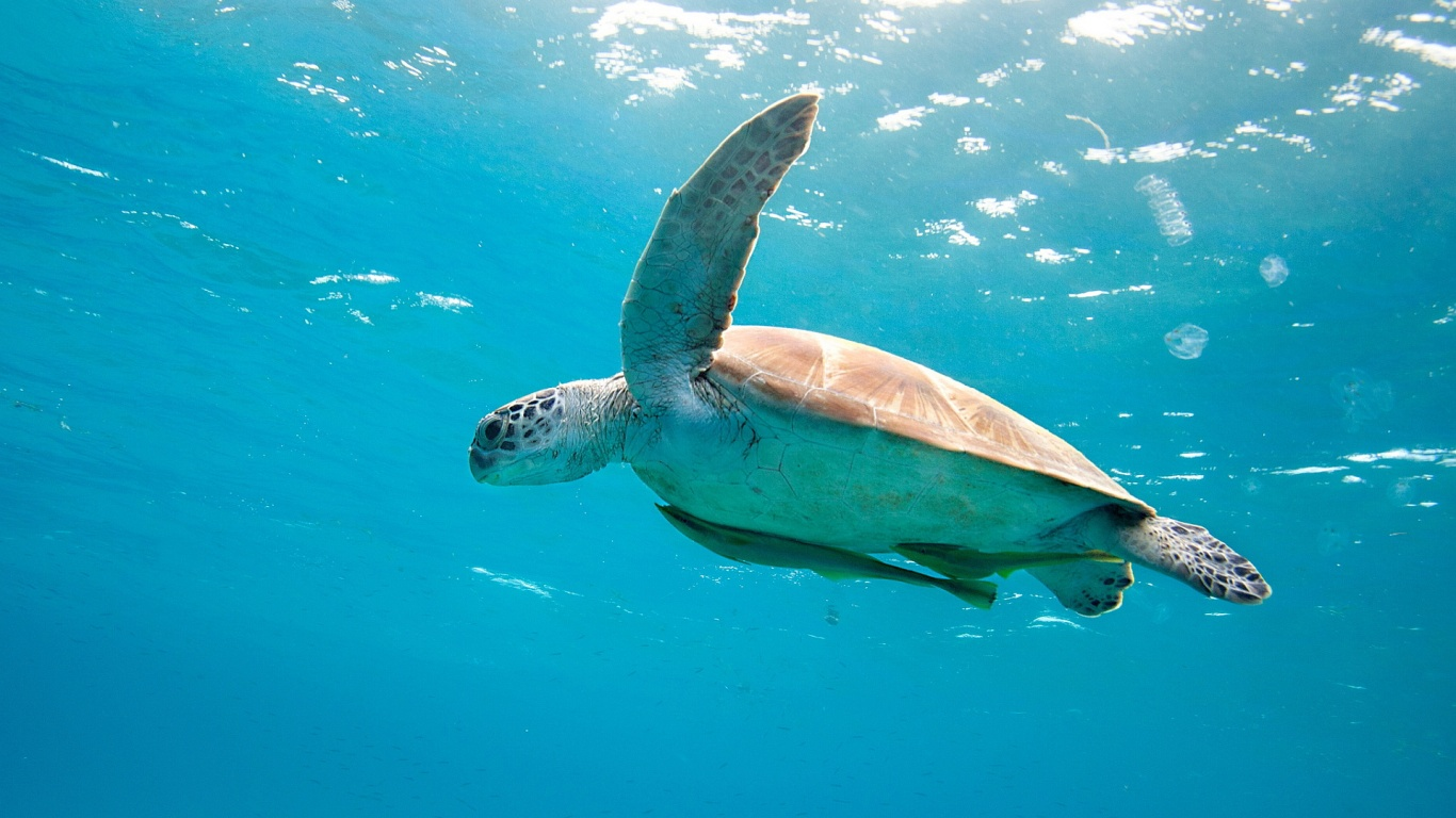 Sea Turtle Wallpaper HD ...