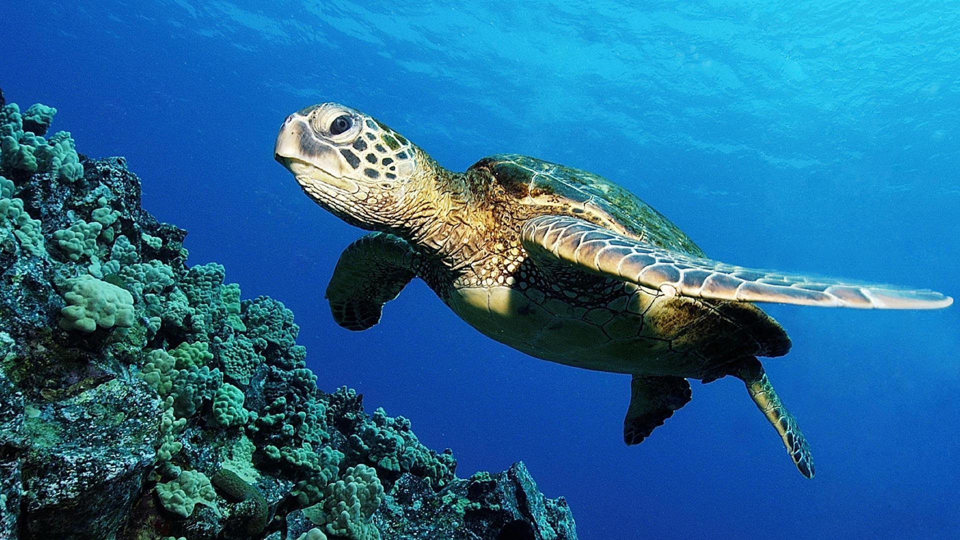 Sea Turtle; Sea Turtle ...