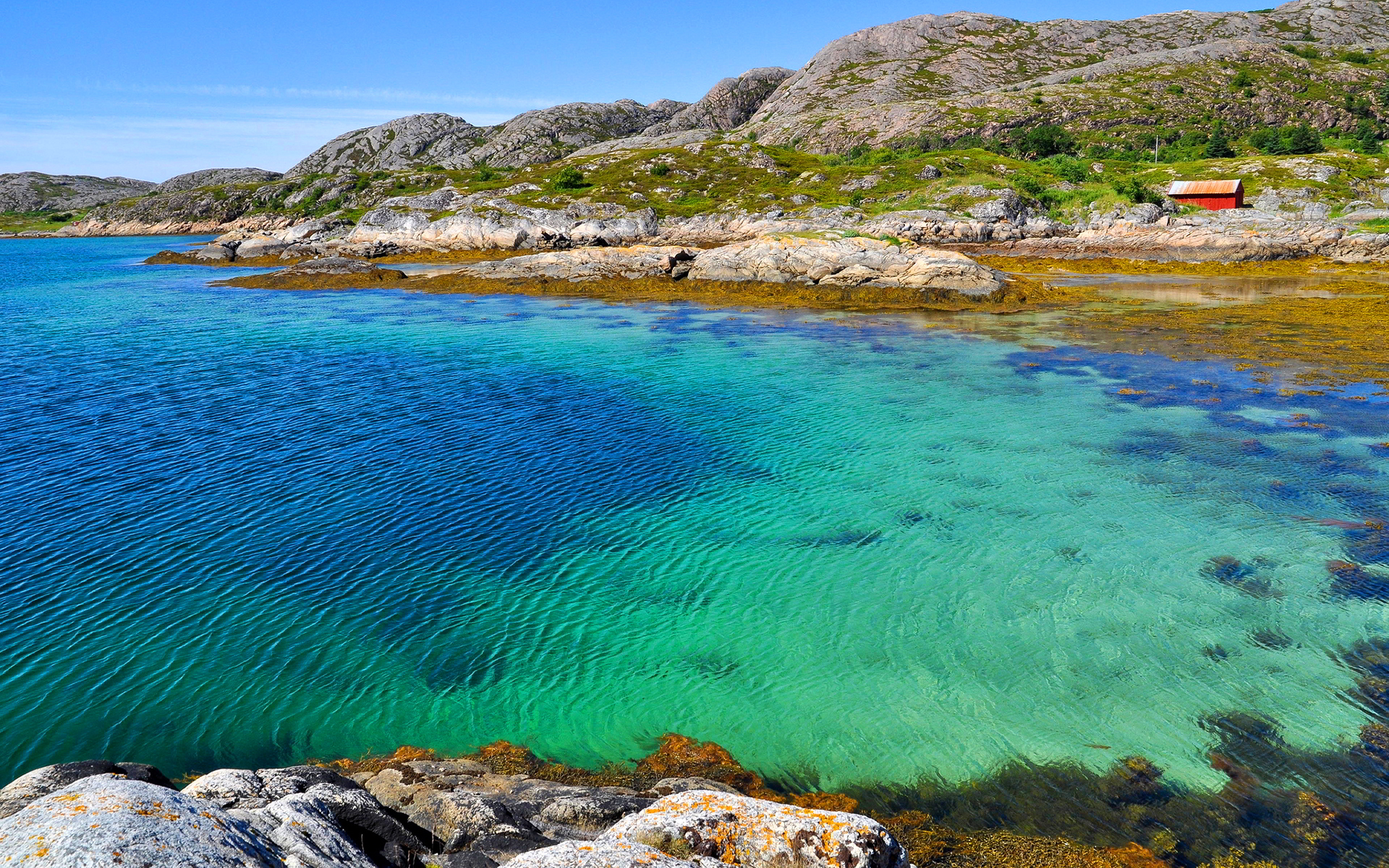 Sea water bay seaweed Wallpapers Pictures Photos Images. «