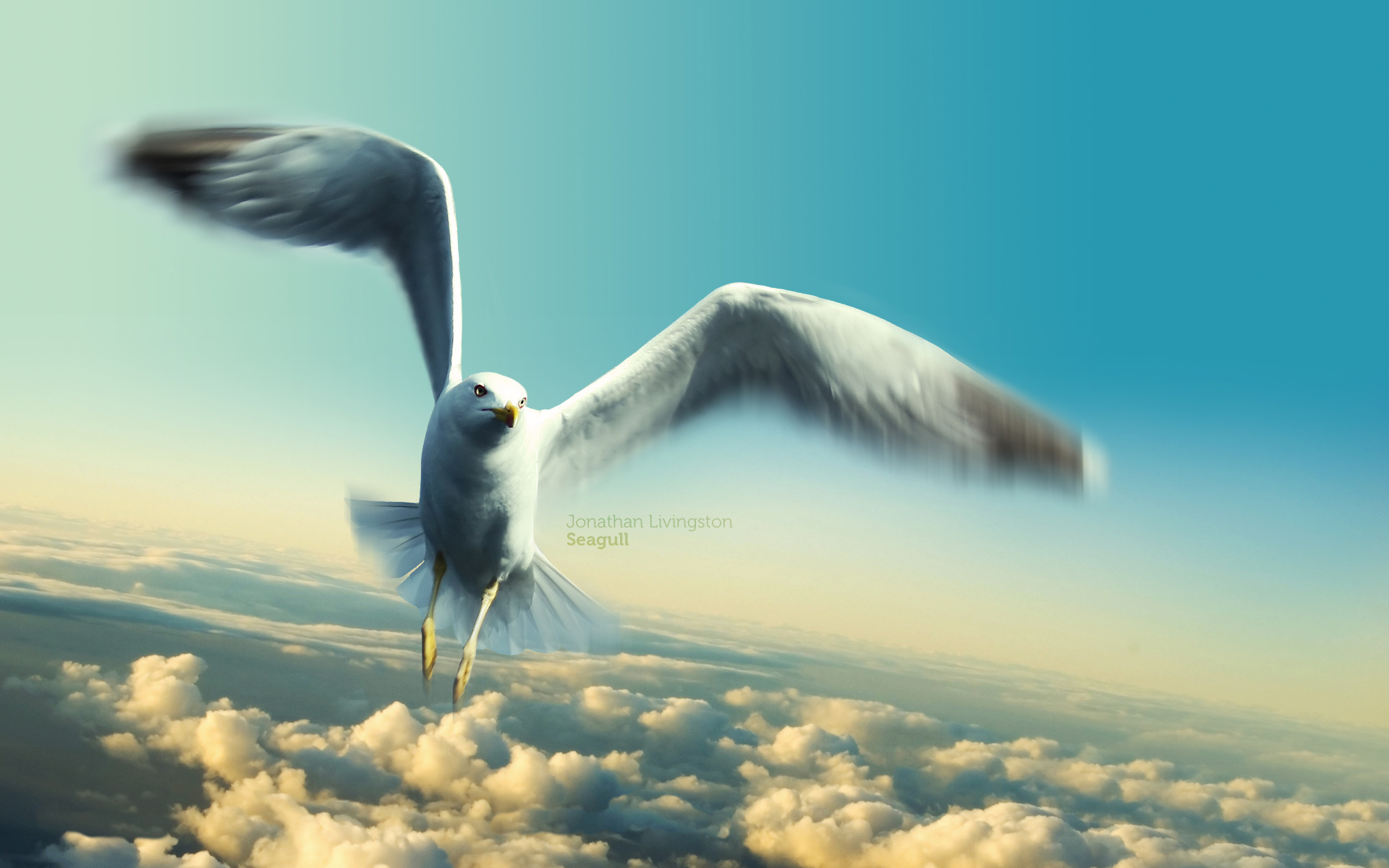 Seagull Background
