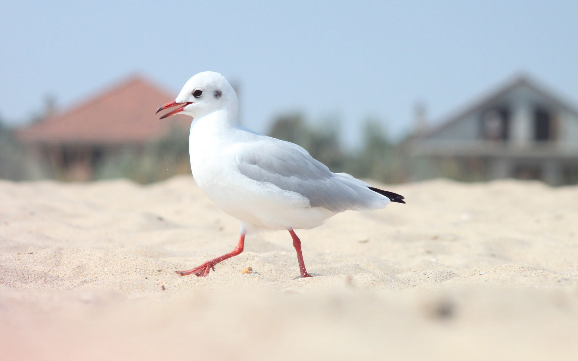 Bird Seagull Sand Beach