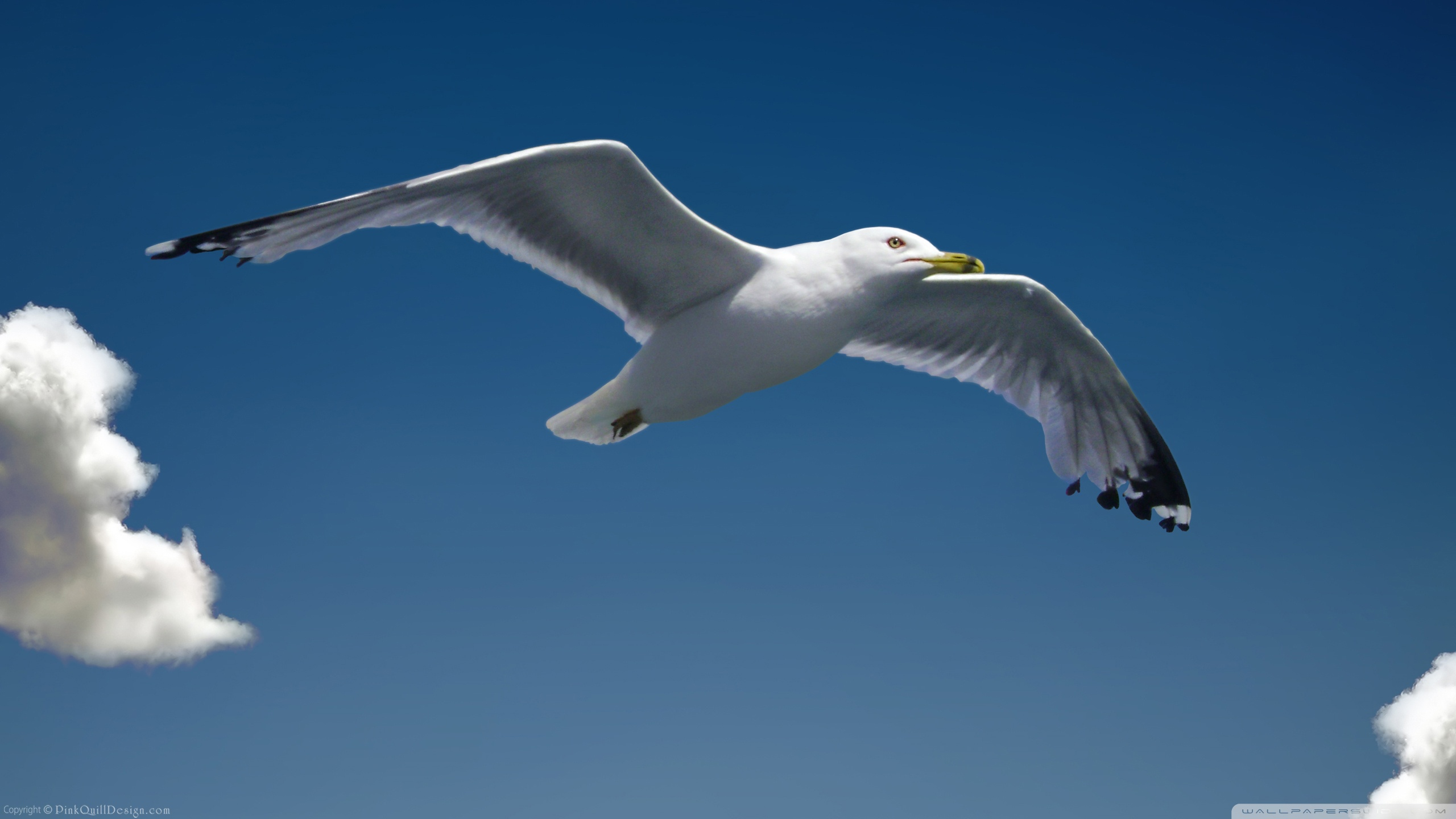 Seagull Pictures