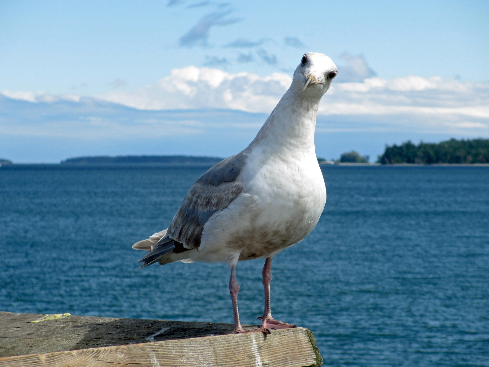 Public Breastfeeding Nightmare: How My Chest Narrowly Escaped the Wrath of Seagulls | Babble