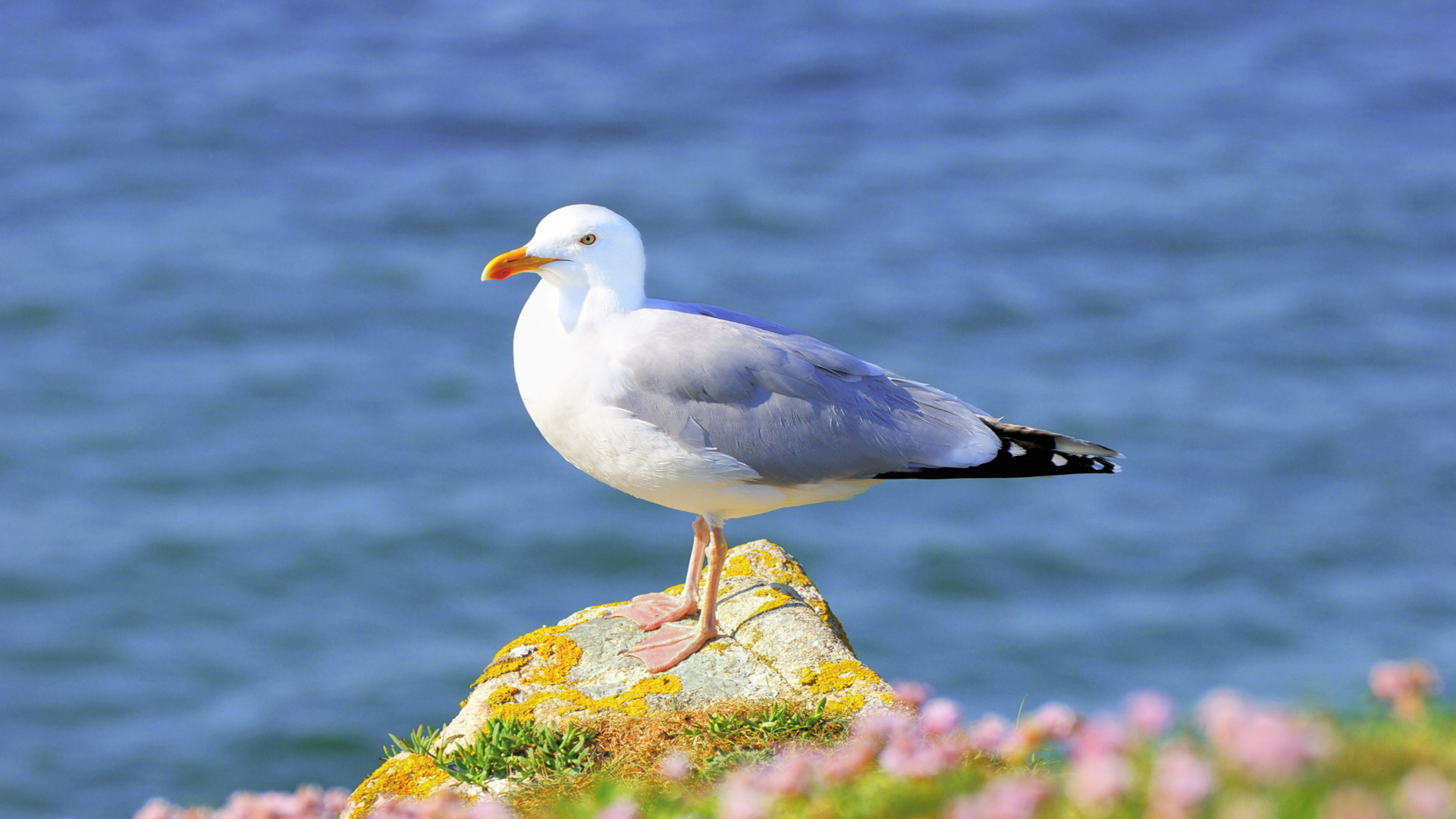 Seagull Wallpaper