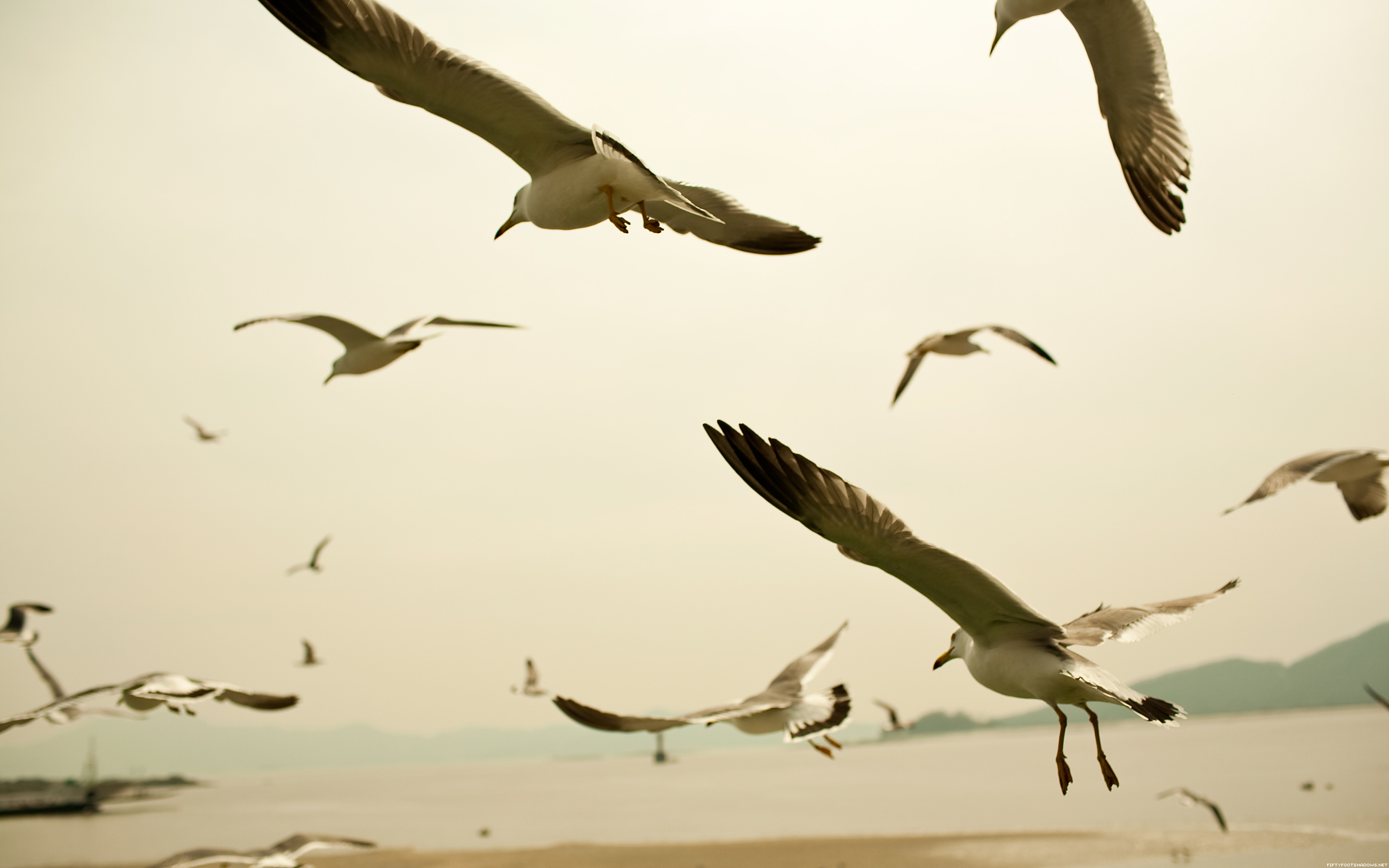 Seagulls HD Wallpaper 34112 High Resolution