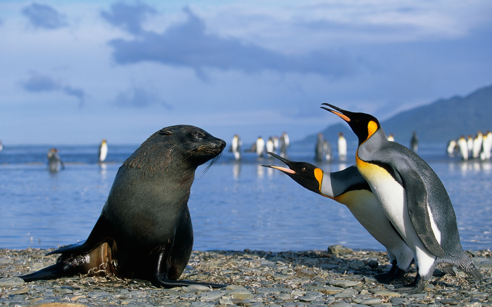 1920x1200 Wallpaper penguins, antarctica, seal, friendship, sea